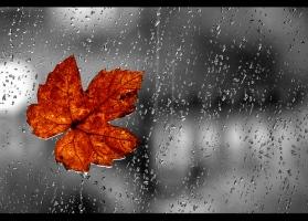 rainphoto4